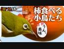 1118【柿を食べる小鳥たち】メジロやシジュウカラ、ヒヨドリ...