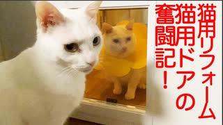 居間の死闘⁉︎不器用なネコチャンズvs猫