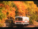 【のら】廃止された線路に列車を撮りに行ってきた。