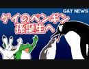 【ゲイニュース】ゲイのペンギン 孫誕生へ