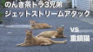 伝説の重鎮猫、修羅猫とのんき猫たちに囲