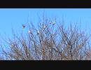 木の上でさえずる鳥たち(薬師寺にて)