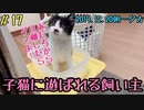 子猫保護11日目 子猫の1人遊びは密着する必要があるので準備が捗りません
