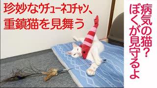 珍妙猫、終末期の伝説の重鎮猫を見守る