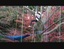 【近江富士花緑公園】ツリーイング体験:3本目に挑戦するあい❤方向転換をして穴の中のトトロを見つけましたwww