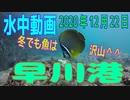 水中動画(2020年12月22日)in 早川港