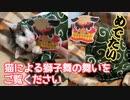 【お正月】おめでたい猫による獅子舞の舞いをお届けします。