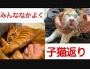 甘ったれネコチャンズ、子猫がえりの競演を見せる