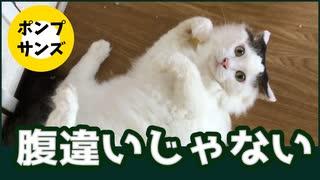 ひとりだけ違う顔したネコの悲哀