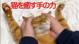 猫癒し技の奥義・顔面両手包み