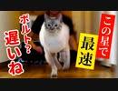 【人類の脅威】猫が人間を圧倒する瞬間をとらえました
