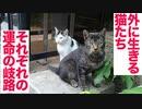 外に生きる猫たち、過酷な運命の分かれ道を生きる
