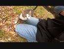 臆病で怖がりな野良猫が最終的にモフられてしまう動画