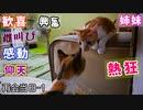 野良猫時代、苦楽を共にした姉と二ヶ月半ぶりの再会