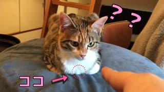 香箱座りの猫に指ズボした時の反応がこち