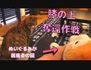 猫の前でぬいぐるみを可愛がったらヤキモチを焼いてくれるのかな?