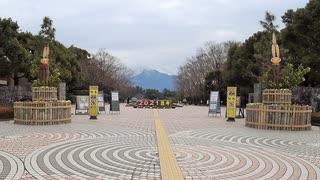 ある日の桜島(その244)<冠雪した桜