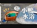 0114R【コガモの水浴び】#身近な生き物語