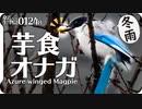 0124B冬の雨の中芋を食べるオナガ #身近な生き物語 #今日撮り野鳥動画まとめ