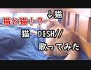 猫と猫!? 猫/DISH// 歌ってみた【かいくん】