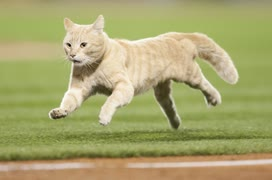 【MLB】メジャーの動物乱入集 Part 1