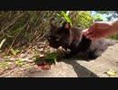 真っ黒で美しい野良猫がすり寄ってきたので一緒に散歩を楽しんだ