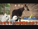 【珍獣】オカピってどんな動物?キリンとの関係性【ゆっくり解説】