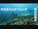 スン崎ダイビング・慶良間諸島