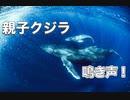 衝撃!水中クジラの鳴き声・ホエールスイム沖縄