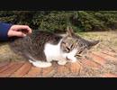また会えた人懐っこい猫、今日はダルそうな声で甘えて来た