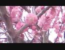 #瀬戸山雄一郎  熊本南部の人吉~錦町の風景 今日の招待者 木揚のお母さん 荒田のお父さん 画像タブレットを利用しています この動画は錦町の防犯にも活躍しています 警察 消防の方も観覧されています