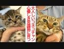 大人しすぎる子猫、心優しき次男坊猫に成長する