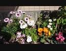【花】移動中に見つけた花 2021/3/18 ~2~