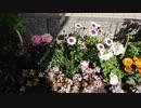【花】移動中に見つけた花 2021/3/18 ~3~
