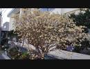 【花】移動中に見つけた花 2021/3/18 ~9~