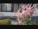 【花】移動中に見つけた花 2021/3/18 ~11~