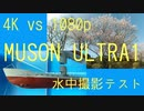 【MUSON ULTRA1】満開桜1080pと4Kで比較、まるゆで水中撮影テスト