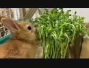 新しい豆苗を食べると思いきや…?