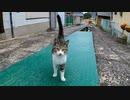 路地裏で野良猫が何か言いながらモフられに来た