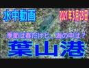 水中動画(2021年3月23日)in 葉山港