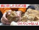 腎不全の元武闘派ボス猫、隠居先で終生の相棒を得る