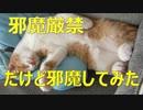 爆睡中の猫の邪魔は厳禁と分かっていながらも邪魔してしまった。