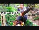 【ぴ】採ってすぐ炭火焼。竹で炊く筍ごはんに煮物。自給自足田舎暮らし