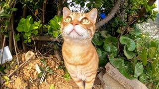 草むらで休んでいた茶トラ猫、近づくと出