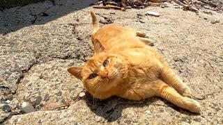 海辺に向かったら防波堤から野良猫がモフ
