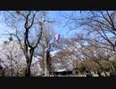 小諸市懐古園の桜゜゜゜゜゜゜