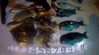 【魚突き】奄美大島 2021年2月25日mp4