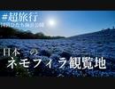 #超旅行 日本一のネモフィラ観覧地