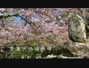 【宮島の桜巡り】 高台にある誓真大徳(せいしんだいとく) 頌徳碑〜塔の岡の桜
