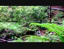 【至福の自然音BGM】雨の森その2【睡眠・休憩・リラクゼーション】
